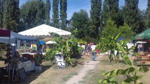 african summer-festival