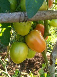 Die Gemüse- und Obstkooperative