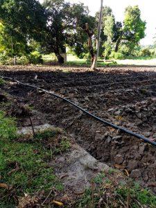 Ökologische Landwirtschaft auf Pemba