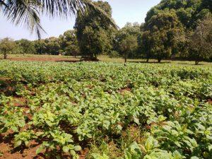 Ökologisch-landwirtschaftliche Kooperative