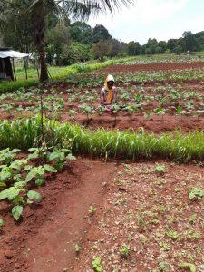 Landwirtschaftskooperative